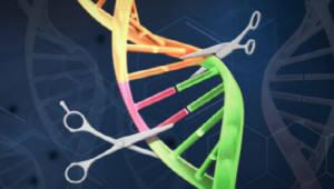 유전자가위 연구 허용 범위 확대, 툴젠·녹십자랩셀 등 연구 주목