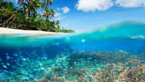 산호 유충 이용해 다른 해역으로 이식하는데 성공