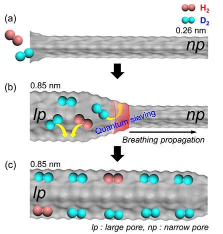 호흡 현상을 보이는 플렉시블 금속-유기 골격체(MIL-53)의 기공에서 중수소가 효과적으로 분리되는 이미지.