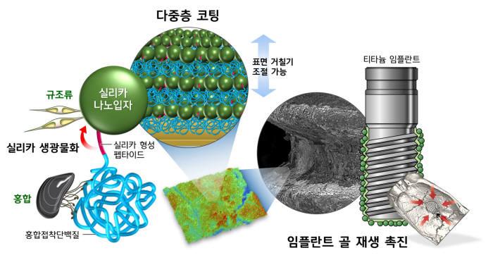 뛰어난 접착력과 인체내 안전성을 검증받은 홍합접착단백질을 분자생명공학적으로 재설계해 실리카 나노입자를 형성하는 단백질 'R5-MAP' 개발관련 모형도.