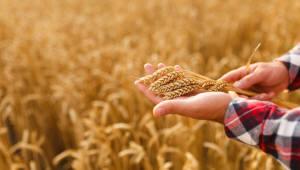 세계 5위 農 유전자원 보유국, 84%는 보관용..활용 확대 절실