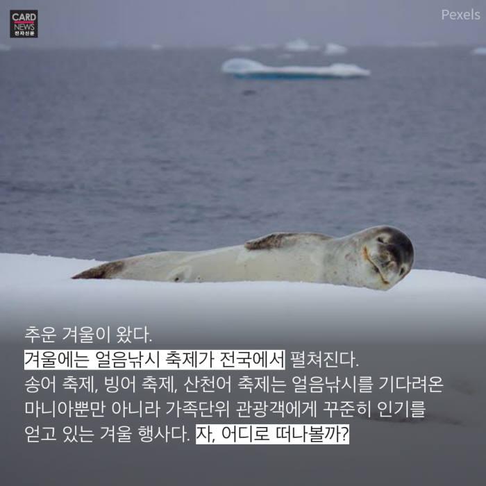 [카드뉴스]겨울 추억 낚아 볼까