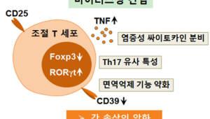 KAIST, 바이러스 간염 악화시키는 세포 원리 규명