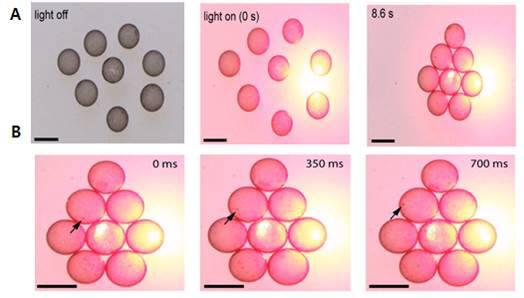 액체방울 주변에 레이저 빛을 가해 계면활성제로 둘러싼 모습