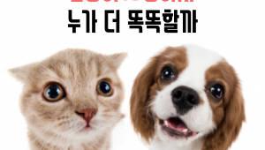 개와 고양이 누가 더 똑똑할까