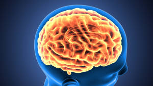 재즈와 클래식 피아니스트 뇌 구조 서로 달라... '필요 자질, 정보처리방식 차이'
