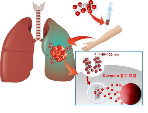 나노물질이 폐에 쌓이는 경향을 이용한 항암제 치료물질 전달 경로