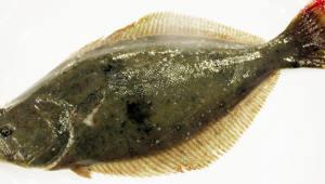 국내 첫 어류 유전자 편집 기술 개발...해양 바이오 경쟁력 확보 시동