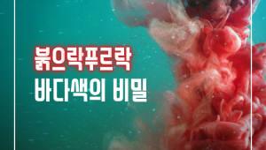 붉으락푸르락 '바다색의 비밀'
