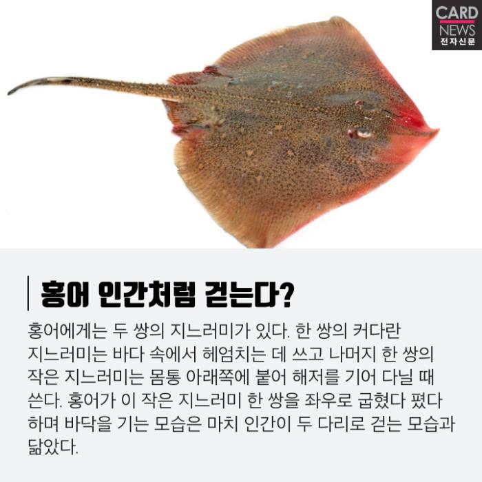 [카드뉴스]인간 보행의 기원, 홍어에 있다?
