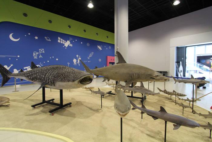 국립광주과학관은 15일부터 9월 2일까지 기획전시실에서 해양특별전 '언더 더 씨(Under the Sea)?미지의 해양탐험'을 개최한다.