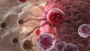[국제]길이 1㎜ 선충으로 암 검사한다…日히타치, 2020년 상용화