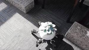식물을 등에 지고 돌보는 거미로봇 개발