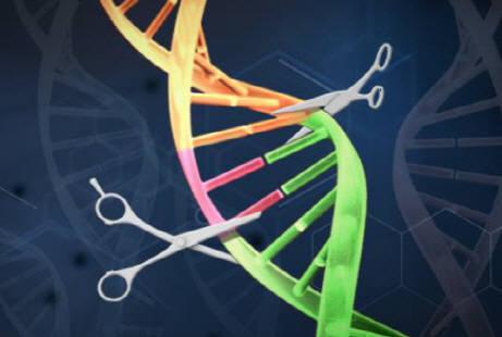스스로 조립된 유전자 가위, 생체 내 전달되어 암 치료