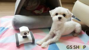GS마이샵, 반려동물 위한 CCTV '앱봇라일리' 판매