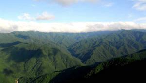 드론으로 국립공원 수목 생태 조사