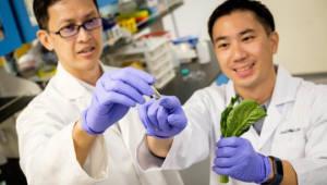 나노섬유가 신체 지방 흡수를 낮춰준다?