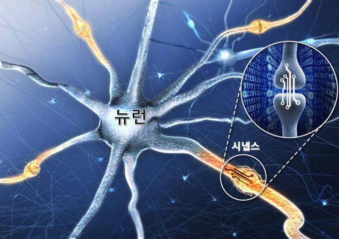이명재 DGIST 지능형소자융합연구실장 연구팀이 개발한 인공 시냅스 소자 모식도. 인공 시냅스 소자는 인간 뇌의 뉴런과 시냅스 연결 부위에서 시냅스 연결 강도를 조절해 기억의 생성, 저장, 삭제에 이르는 일련의 과정인 시냅스 가소성을 구현할 수 있다.