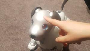 LG전자 '클로이', 소니 '아이보'...일상생활 속으로 성큼 들어온 로봇
