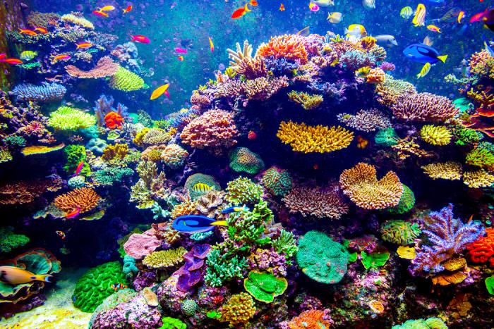 해양 열파가 계속되면 아름다운 산호초는 사라지고 말 것이다. (출처: shutterstock)