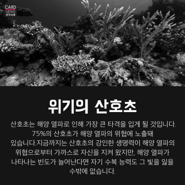[카드뉴스]익어가는 바다, 인류는 속탄다