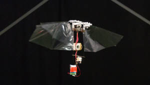 곤충 비행 재현한 '로봇 초파리' 개발