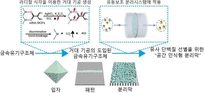 금속-유기 구조체에서의 거대기공 형성 및 유사 단백질 분리