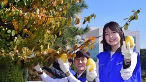 삼성SDI, '모과청' 만들어 이웃돕기 성금마련