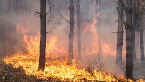 [과학핫이슈]美 캘리포니아 '최악의 산불'
