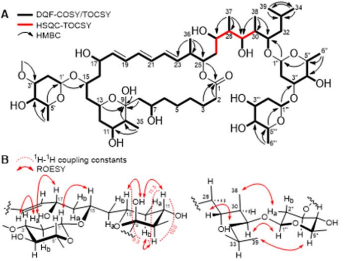 카테누리스포로라이드 A(catenulisporolide A)의 2차원 핵자기공명 스펙트럼 신호
