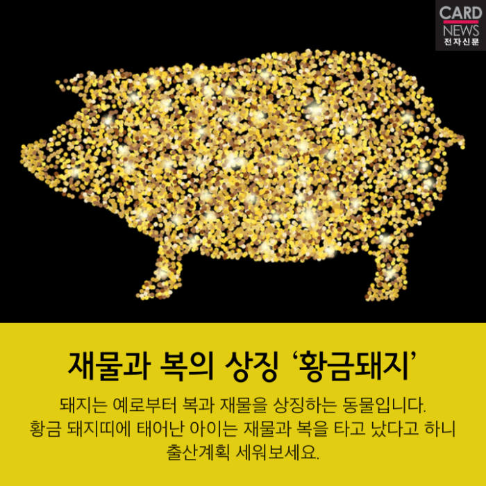 [카드뉴스]황금돼지의 기해년, 2019년은 우리 해!