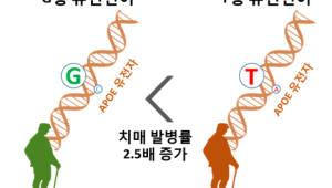 조선대 치매국책연구단, DNA 검사만으로 치매 걸릴 확률 알 수 있는 진단법 개발