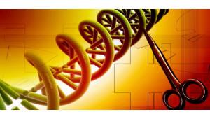 {htmlspecialchars(美 UC버클리 연구팀, 새 CRISPR 유전자가위 발견)}