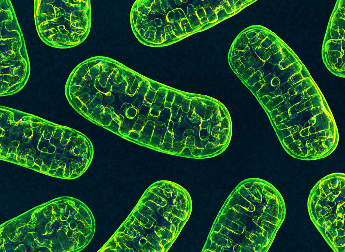 인터벌 트레이닝은 우리 몸의 에너지를 생산하는 미토콘드리아에 긍정적인 영향을 미쳐 근육세포의 활성화를 돕는다. (출처: shutterstock)