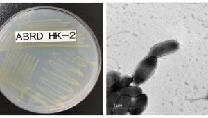 환경호르몬 '프탈레이트' 분해 능력 뛰어난 신종 미생물 발견