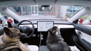 테슬라, 차안에 반려동물 보호하는 '개 모드' 공개