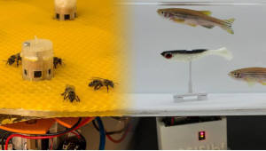 물고기와 꿀벌 소통 돕는 로봇 기술 개발