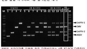 국립산림과학원, 약용자원 '천궁' 감염 바이러스 동시진단 기술 개발