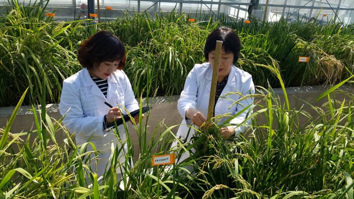 경남농업기술원 연구원들이 전자 연구노트 시스템을 이용해 농작물 생육 상태를 기록하고 있다.