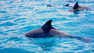 2023년 울산 앞바다에 고래 관광용 전기추진선 띄운다