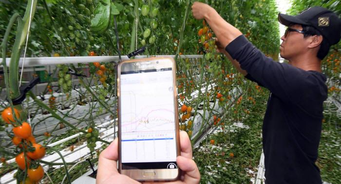 정부가 농업 스마트화를 위한 전략을 마련했다. 사진은 농사 기술에 ICT를 접목한 전남 화순 스마트팜 민간 1호 농장.