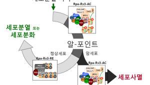 충북대, 암세포 자살 유도하는 핵심원리 규명
