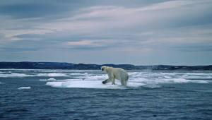 북극곰 멸종을 막자