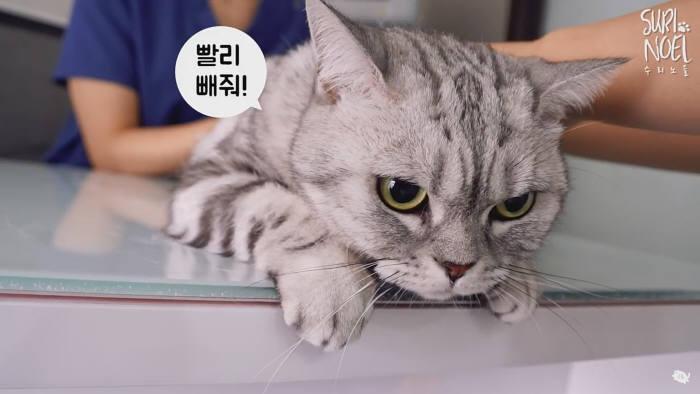 CJ ENM 1인 창작자 지원 사업 다이아 티비의 파트너 반려묘 채널 수리노을 영상