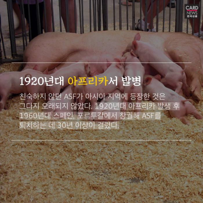 [카드뉴스]아프리카 돼지열병 주의보
