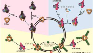 IBS·UNIST, DNA와 단백질 '이별공식' 밝혔다