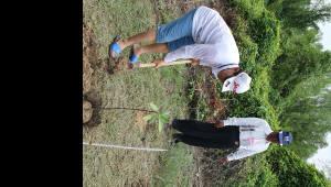 한전, 미얀마 맹그로브 숲 나무 심어 탄소배출권 확보