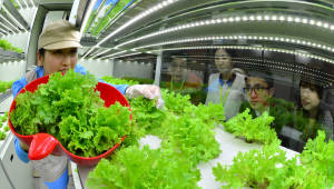 1인 가구, 온라인 트렌드 맞춰 채소산업 재정비...농식품부 채소산업발전기획단 운영