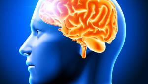 '난공불락' 치매 치료제 개발, '신경 흉터'로 새 방향 제시