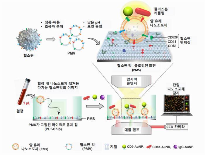 나노소포체 검출 및 시각화 실험 개략도